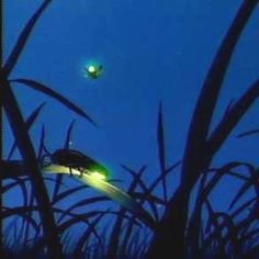 Lightning bugs. Used to see so many of these at night.