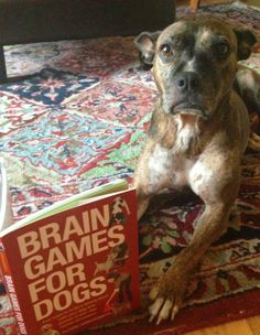 Let's Talk: Do Your Dogs Have You Well Trained? | Dogster