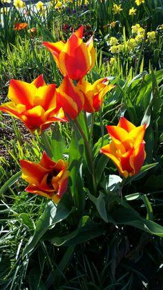 Frühling Plants, Flora, Plant, Planting
