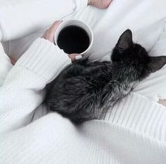 white, cat, snuggles, bed, selv