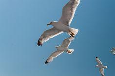 Seagulls by Fabi Nuka on 500px Bird, Animals, Animales, Animaux, Birds, Animal, Animais