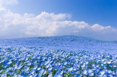 You must see these astounding photos of a Japanese park with 4.5 million flowers