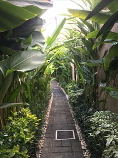 trendy landscape ideas for backyard tropical garden paths Side Yard Landscaping, Tropical Landscaping, Landscaping Plants, Landscaping Design, Landscaping Melbourne, Narrow Garden, Side Garden, Garden Paths, Tropical Garden Design