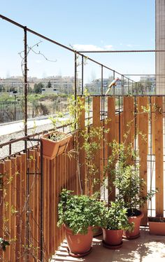 Gallery of 80 Viviendas De Protección Oficial En Salou / Toni Gironès - 14 Contemporary Architecture, Landscape Architecture, Social Housing Architecture, Privacy Walls, Garden Structures, Patio, Home Projects, Exterior, Gallery