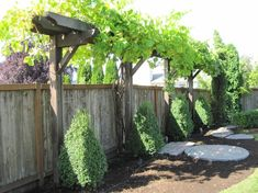 Grape Vine Arbor System (website w/ lots of cool trellis designs). Reminds me a lot of this, I'm sure they could be combined somehow http://www.houzz.com/photos/154233/The-Lodge-traditional-gazebos-