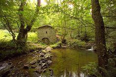 Bosque de Muniellos, reserva natural - Asturias