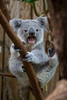 ~~kung fu koala II by Missud~~