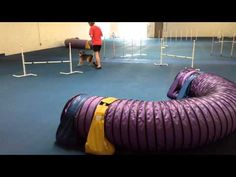 Using Tricks To Motivate Your Agility Dog - YouTube