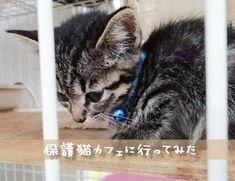 猫の里親にもなれる大阪の保護猫カフェ譲渡型猫カフェ ねこの木さんに行ってきました : もうマイルドに生きたい 猫カフェ 猫の里親になりたい