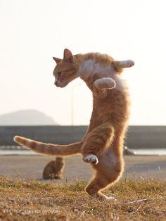 Thriller dance and kung fu collab cats in action dancing cat, cute ca I Love Cats, Crazy Cats, Cool Cats, Baby Animals, Funny Animals, Cute Animals, Cute Kittens, Cats And Kittens, Bb Chat