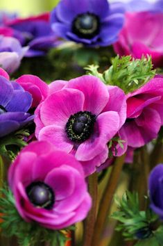 Anemone: plant and maintain Anemone Flower, My Flower, Flowers Perennials, Planting Flowers, Garden Beds, Garden Plants, Roses Garden, Amazing Flowers, Beautiful Flowers