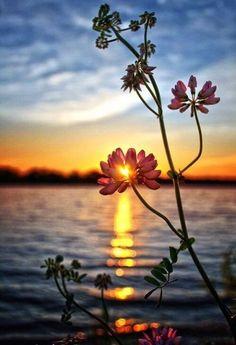 Takk for i dag og god natt! 💞 Over 50 Sunset Photography, Creative Photography, Amazing Photography, Landscape Photography, Summer Nature Photography, Photography Classes, Life Photography, Photography Ideas, Beautiful Nature Wallpaper