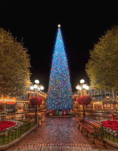 Disneyland - Christmas Tree