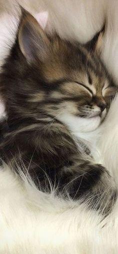 Mamy's Hug #kitty kitten cat adorabel OMG AWW cute amazing #by Ahmad El-Massry