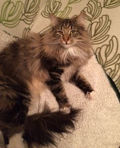 Ihana karvakasa ❤️ lovely furry thing