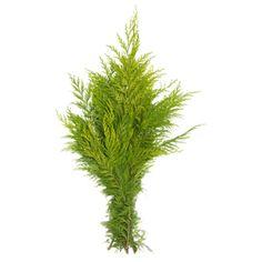 Cypress i bunt