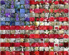 Red and white flowers with the flag 4th of july pinterest red and white flowers with the flag 4th of july pinterest white flowers flags and flowers mightylinksfo