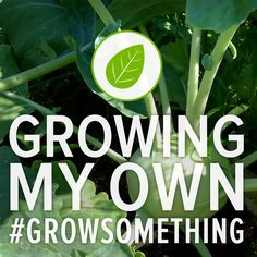Who's up for growing kohlrabi this year? #gardening