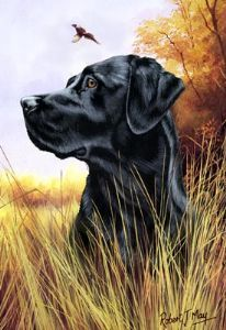 Signierter schwarzer Labrador Retriever Head Study Print – Sharon Wheat – Join in the world of pin Schwarzer Labrador Retriever, Black Labrador Retriever, Labrador Retrievers, Retriever Puppies, Best Guard Dogs, Best Dogs, Hunting Drawings, Dog Corner, The Fox And The Hound