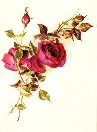 Flower Hip Tattoos ~ Women Fashion And Lifestyles