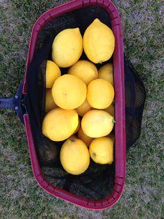 Lemons I caught