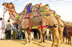Camel Festival,Bikaner