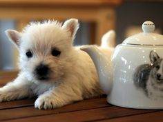 Yes, the teapot is nice, but LOOK AT THE PUPPY!!! (it's a West highland Terrier, fyi)