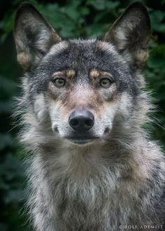 New Powerful Portraits of Animals by Wolf Ademeit - My Modern Metropolis