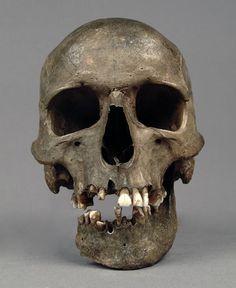 human skull with mandible