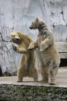 dancing-animals