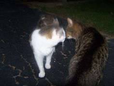 george & Isabell kissing lol