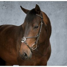 Dover Saddlery Everyday Figure 8 Bridle - brown, horse size
