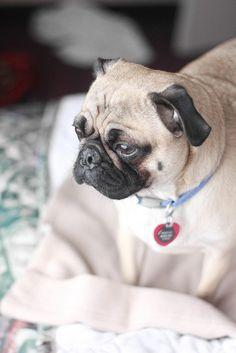 Hotel dog by SprinkleBakes, via Flickr