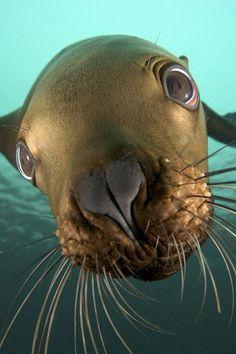 Sea #wild animals