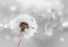 Vlies Fototapete 250x175 cm - 3 Farben zur Auswahl - Top - Tapete - Wandbilder XXL - Wandbild - Bild - Fototapeten - Tapeten - Wandtapete - Pusteblume Blumen Natur b-C-0072-a-b
