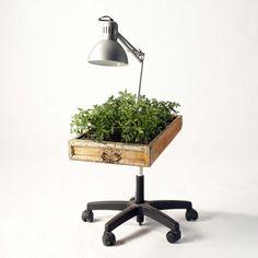 lamp + herb garden + drawer + office chair wheels = i like