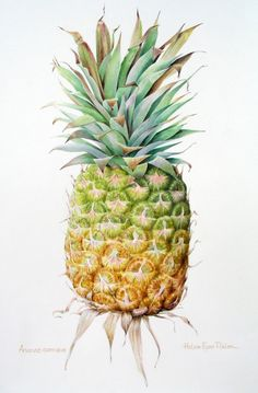 Ananas Comosus ~ watercolour by Helen Eyre Pikler. i actually don't like the taste of pineapples but they look amazing