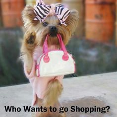 At All Things Yorkie! Cute little shopping yorkie. I want that so bad!