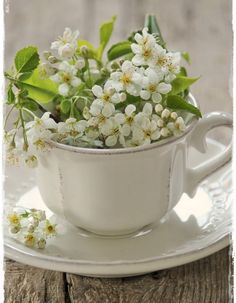 803 best tea cup flower images on pinterest in 2018 teacup flowers i love flowers filling a tea cup x mightylinksfo