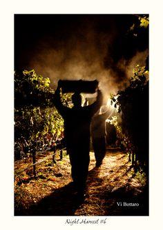 *Night Harvest