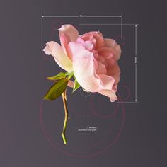 This photographic series is an artistic design study of plants as if they were objects with a fixed way of being.