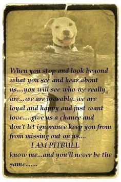 pit bull I dare you not to cry cause I sure did In 2014 I hope people will accept pit bull's instead of criticizing them
