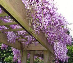 glicina enrejada Whilst early inside strategy, the actual pergola have been having a bit of Wisteria Trellis, Bamboo Trellis, Wisteria Pergola, Bamboo Garden, Pergola Swing, Pergola Patio, Pergola Kits, Pergola Ideas, Patio Roof