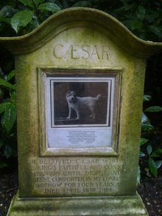 Caesar's grave at Marlborough House. Caesar (1898–1914) was a Wire Fox Terrier owned by King Edward VII.  After the King's death in 1910, the dog attended the funeral and walked in the procession in prominence ahead of nine kings and other heads of state. Caesar has been the subject of paintings, and a hand crafted hardstone model created by the House of Fabergé.
