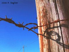 Alex photograph project: Fence... #Photography