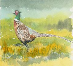 Pheasant, by Graham Wright