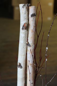 Check out the deal on 4 Foot Natural Birch Branches with Red Twigs and Snow at Battery Operated Candles