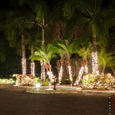 Holiday seasons are the best at #grandpineappleantigua