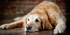 Progetto quasi, adottiamo i cani anziani, disabili e malati