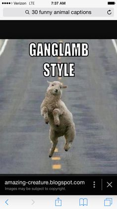 He reminds me of my lamb